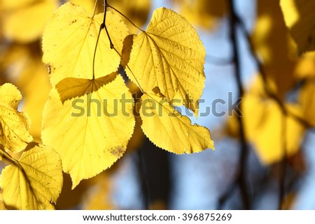 Colors of Autumn, leaves with beautiful bokeh