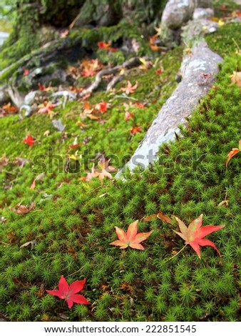 colors of japanese maples in national historical site - stock photo