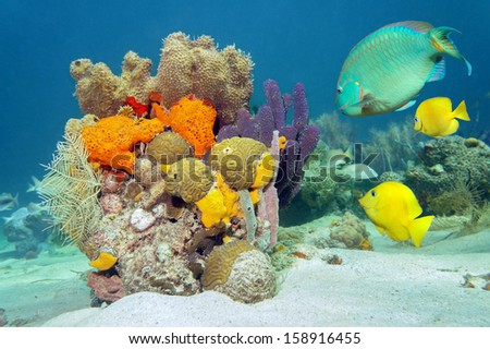 Colors of marine life underwater with tropical fish, coral and sea sponges, Atlantic ocean - stock photo