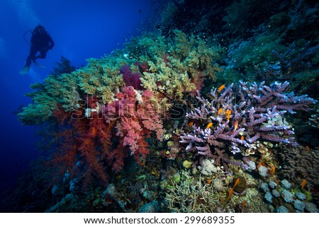 Colors of the reef at depth at Fury Shoals Reef, Red Sea, Egypt - stock photo