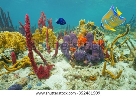 Colors of underwater marine life on the seabed with corals, sea sponges and tropical fish, Caribbean sea, Central America - stock photo