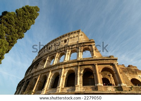 colosseum in rome and a solitary cypress tree