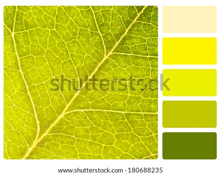 Colour palette with complimentary swatches. - stock photo