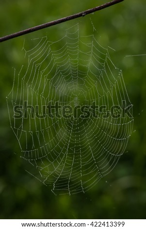 Colour picture of a wet spider web
