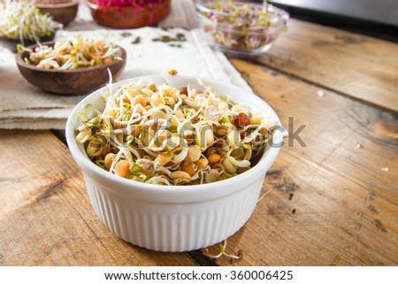 Colourful and healthy crunchy bean sprouts. - stock photo