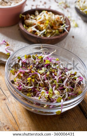 Colourful and healthy crunchy mixed seeds and various sprouts. China rose, alfalfa, bean sprouts. - stock photo