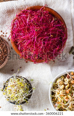 Colourful and healthy red beet sprouts, with bean sprouts, linseed, alfalfa and pumpkin seeds also in the frame. - stock photo