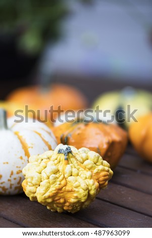 Colourful and knobby decorative autumn gourd.