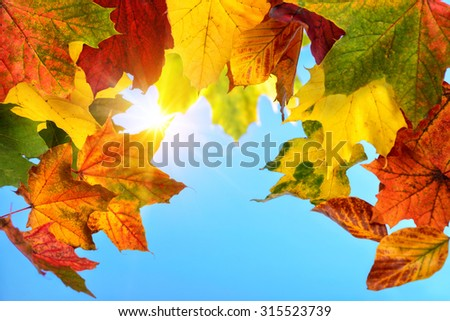 Colourful autumn leaves in the foreground framing the clear blue sky and the sun in the background - stock photo