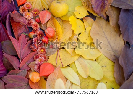 Colourful autumn leaves layed out on a wooden table.