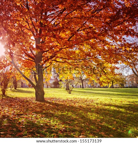 Colourful autumn park. Some lens flare. - stock photo