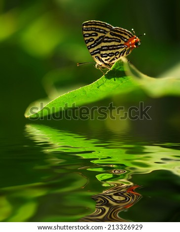 colourful butterfly on leave. digital compositing with colour tone, water reflection and ripple effects. - stock photo