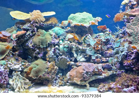 Colourful coral reef deep underwater - stock photo
