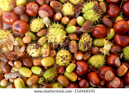 Colourful fall detritus of horse chestnuts, acorns, beechnuts and cobnuts as a natural background - stock photo