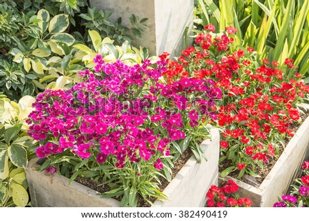 Colourful Flowerbeds in Garden - stock photo