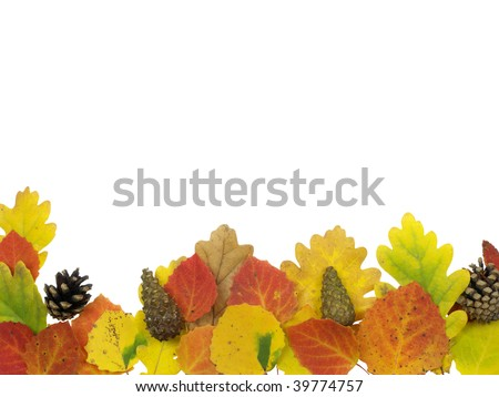 colourful leaves on a white background