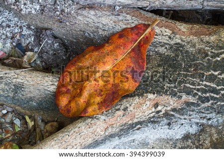 Colourful leaves on the ground  in Thailand is the summer - stock photo