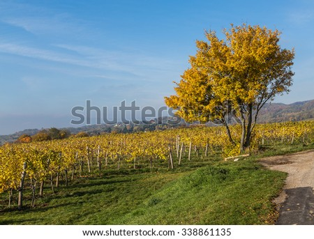 Colourful leaves on Vineyard Plantations in Austria during the Autumn. Hills can be seen in the distance.