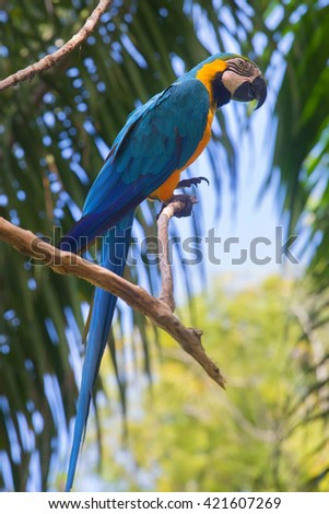 colourful macaw parrot