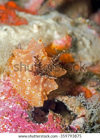colourful nudibranch - stock photo
