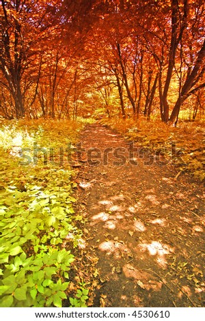 Colourful old autumn forest - stock photo
