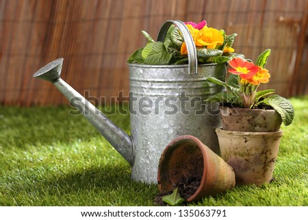 Colourful orange potted flowers and old clay flowerpots standing on a green lawn in summer sunshine with a metal watering can in a gardening concept - stock photo