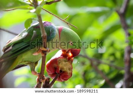 Colourful parrot bird - stock photo