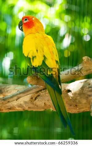 Colourful parrot bird sitting on the perch - stock photo