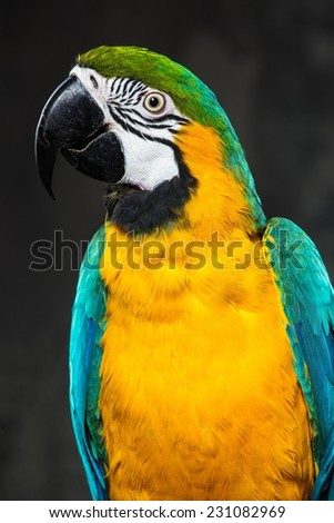Colourful parrot close-up - stock photo