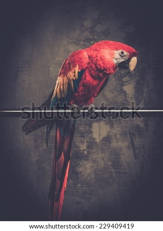 Colourful parrot sitting on a perch  - stock photo