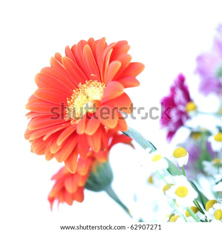 colourful summer flowers - stock photo