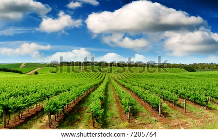 Colourful Vineyard in One Tree Hill, South Australia - stock photo