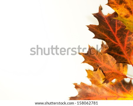 Colourfull autumn background made from leaves