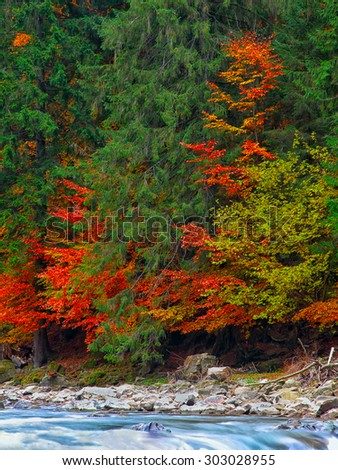 Colourfull forest in mountains in autumn time. Rocky shore of the river