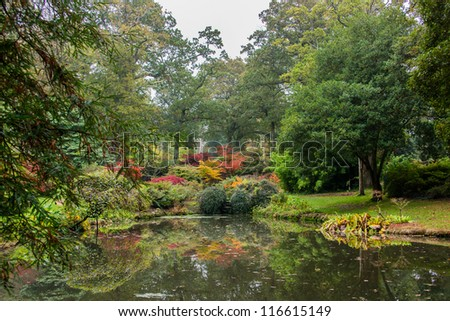 Colours of a Japanese style garden in autumn.