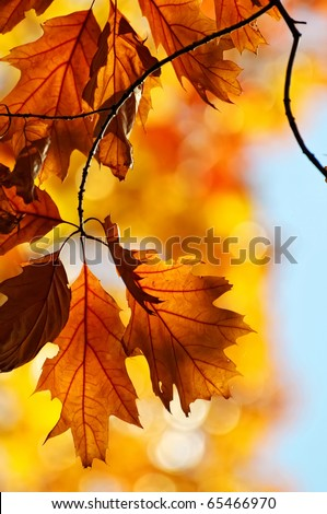 Colours of Autumn - colorful leaves - stock photo