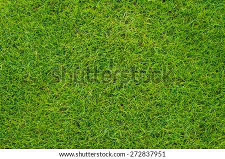 colse up natural background texture of Beautiful fresh real green grass pattern from golf course - stock photo