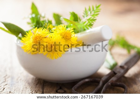 coltsfoot flowers spring herbs in mortar - stock photo