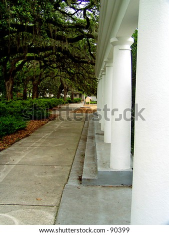 Columns Under Savannah Trees - stock photo