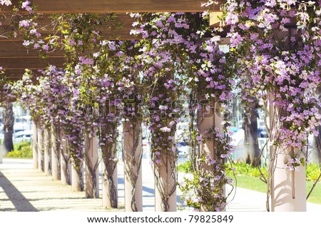 Columns with Vine Flowers at a Pier - stock photo