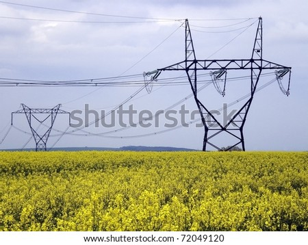 Colza field under pylons of power lines - stock photo