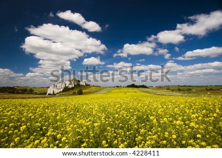 Colza field with blue cloudy sky