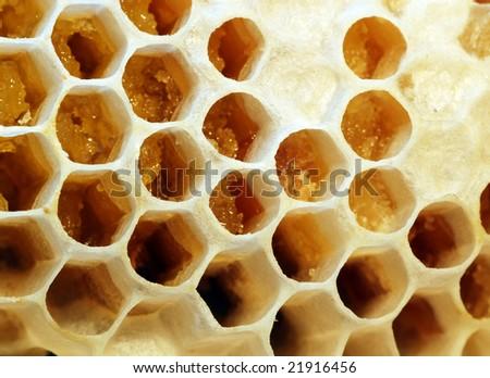 Comb-honey - stock photo
