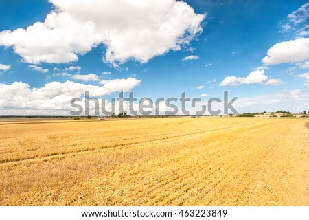 Combine cutting wheat on the field. Harvest time. Vibrant multicolored outdoors horizontal image.