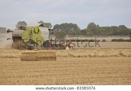 combine harvester collecting the wheat and grain