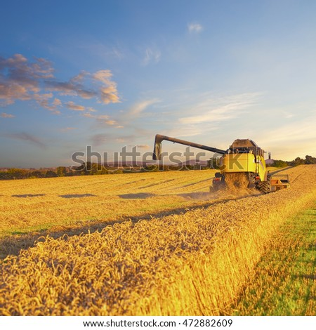 Combine harvester harvests grain field. Modern mechanised farming concept.
