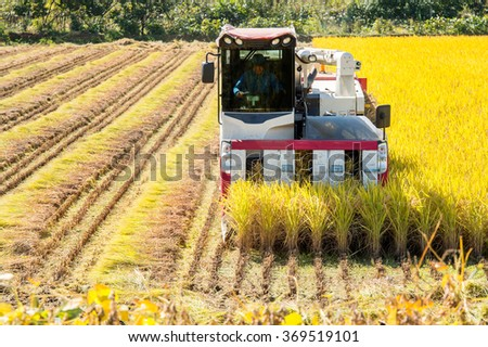 Combine harvester in a rice field during harvest time. - stock photo