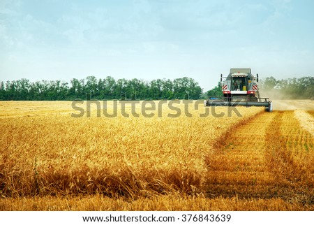 Combine harvester working on the wheat field  - stock photo