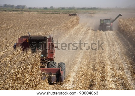 Combine harvesting corn, San Joaquin Delta, California. - stock photo