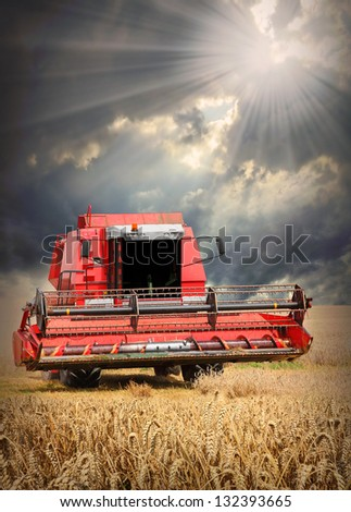 Combine harvesting wheat  against dramatic sky. - stock photo